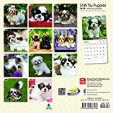 Shih Tzu Puppies 2018 7 x 7 Inch Monthly Mini Wall