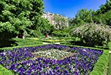"Flower Beds in Murillo Square, Prado Museum, Madrid, Spain, Europe, purple landscape photo nature photography wall art home office decor sizes up to 17x25"" fine art print signed by the artist."