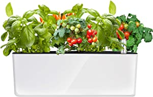 Rectangle Self Watering Planter with Water Level Indicator, Window Gardening Box, Indoor Home Herb Garden, Modern Decorative Planter Pot, 16x 5.5 Inch, White (Plants Not Included)