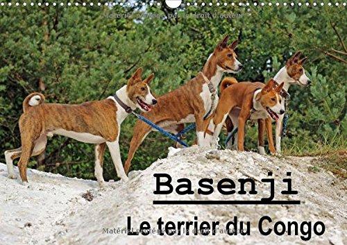 Download Basenji Le Terrier Du Congo 2017: Le Basenji Est Une Race De Chien Originaire De Centrafrique (Calvendo Animaux) (French Edition) PDF