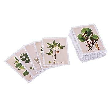 MagiDeal 45 piezas/Lot Vintage Plantas Sello Mini Papel ...