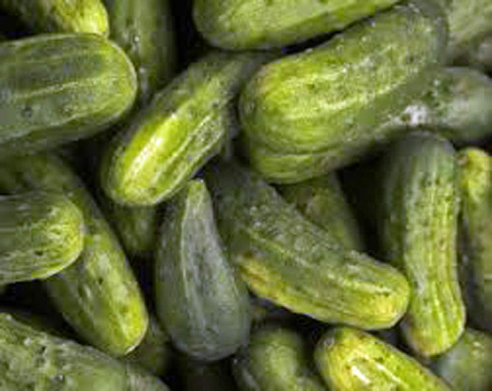 Cucumber, National Pickling, Heirloom, Organic 25 Seeds, Great for Pickling