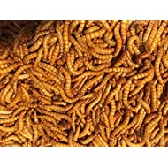 """Bulk Live Mealworms - 1000 count (Large - 1"""")"""