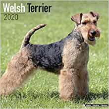 Welsh Terrier Calendar Dog Breed Calendars 2019 2020 Wall Calendars 16 Month By Avonside Multilingual Edition Megacalendars 9781785806667 Amazon Com Books