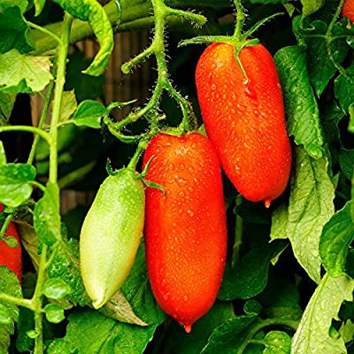 Tomato Garden Seeds - San Marzano (Determinate) - Non-GMO, Heirloom, Vegetable Gardening Seed