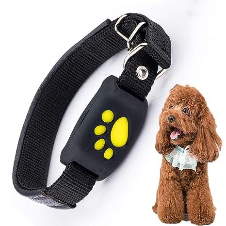 FXQIN Cuello localizador GPS para Perros, Collar Impermeable ...
