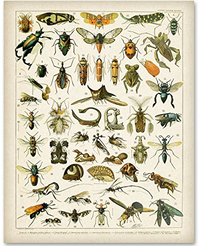 Insects - 11x14 Unframed Art Print - Great Home (Insect Wall Decor)