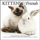 Kittens & Friends Mini 2020 Calendar