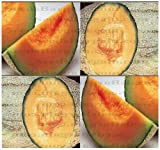 50 HALES BEST JUMBO CANTALOUPE seeds MELON ~GREAT FOR HOT ARID DROUGHT LOCATIONS