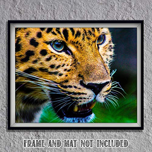 Captivating Cheetah-8 x 10- Wall Art-Ready to Frame-Home Décor, Office Décor & Wall Prints for Animal, Safari & Jungle Theme Wall Decor. Suspenseful & Hypnotic Cheetah. Great Gift for Cat Lovers!