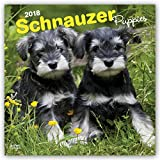 Schnauzer Puppies 2018 12 x 12 Inch Monthly Square Wall Calendar, Animals Dog Breeds Puppies