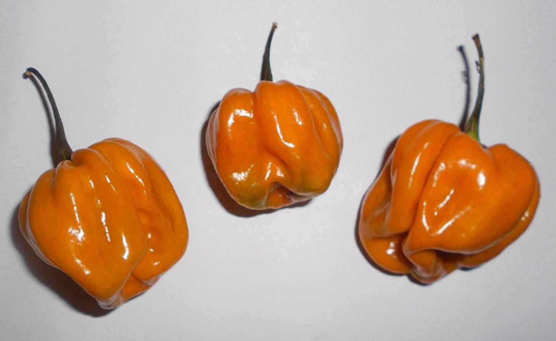 10 Seeds by Rare Habanero Mustard Pepper Samenchilishop