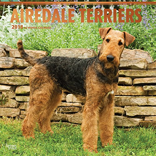 Airedale Terriers 2018 12 x 12 Inch Monthly Square Wall Calendar with Foil Stamped Cover, Animal Dog Breeds (Multilingual Edition)