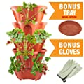 Five Tier Stackable Planter Grow Fresh Strawberry Vegetable Herb or Other Garden Plants Vertical - Seeds or Plants - 30% More Planting Area - BONUS Leather Gloves and Indoor Outdoor Tray (Terra Cotta)