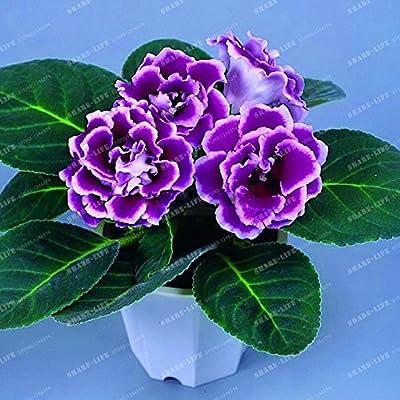 Kasuki 9 Colors Gloxinia Bonsai Sinningia Gloxinia Flower Bonsai Home Bonsai DIY for Garden Ornamental-Plant 100PCS - (Color: 4): Garden & Outdoor