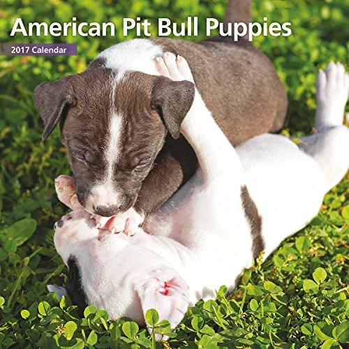 Magnet & Steel 2017 American Pit Bull Puppies Calendar, Mini Calendar