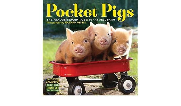 Pocket pigs mini wall calendar 2016 richard austin 9780761184928 pocket pigs mini wall calendar 2016 richard austin 9780761184928 books amazon voltagebd Choice Image
