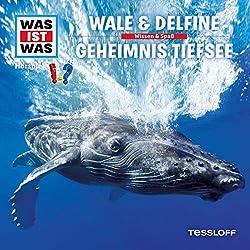 Wale und Delfine / Geheimnis Tiefsee (Was ist Was 13)