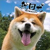 秋田犬 2019年 カレンダー 壁掛け CL-377