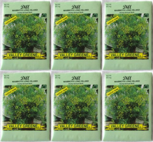 - Valley Greene (6 Pack) 350 mg/Package Dill Mammoth Long Island Heirloom Variety Seeds