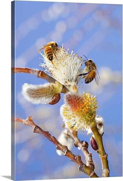 Art print POSTER CANVAS Honey Bee Gathering Nectar