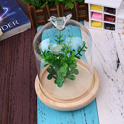 KICODE Display Glass-Cover Bird Transparent Vast Creative Miniature Admire-View Decoration Accessory Gifts