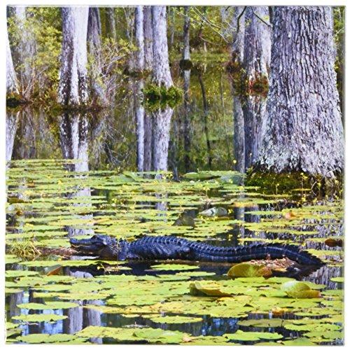 - 3dRose ct_94248_3 South Carolina, Cypress Gardens. Alligator, Swamp-US41 BJA0009-Jaynes Gallery-Ceramic Tile, 8-Inch