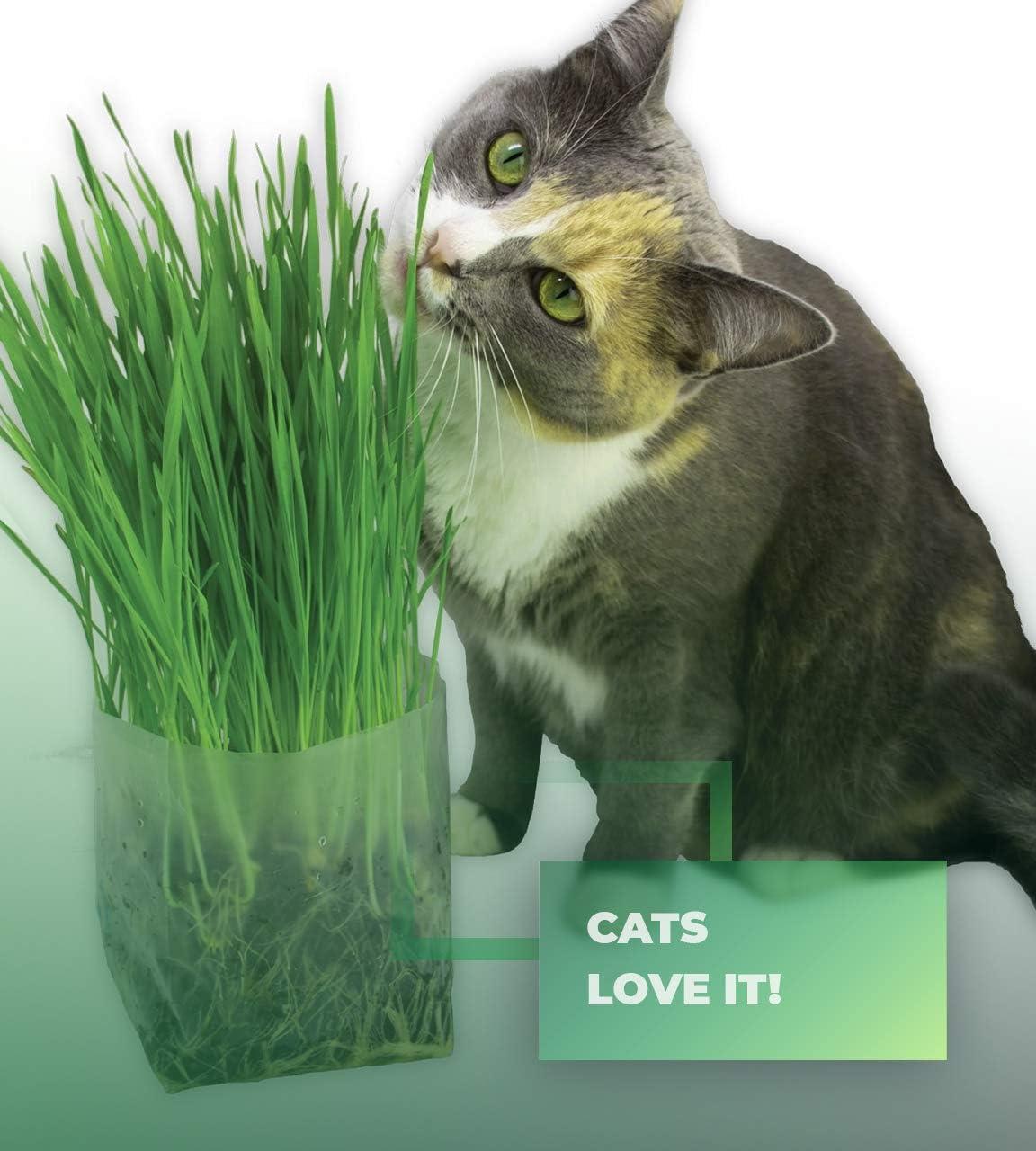 La mejor hierba para gatos [year] (análisis y guía) 9