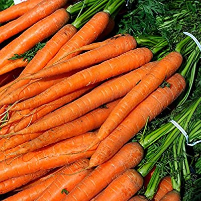 Imperator 58 Carrot Seeds - Pelleted & Treated - Non-GMO, Heirloom Vegetable Garden Seeds - Gardening
