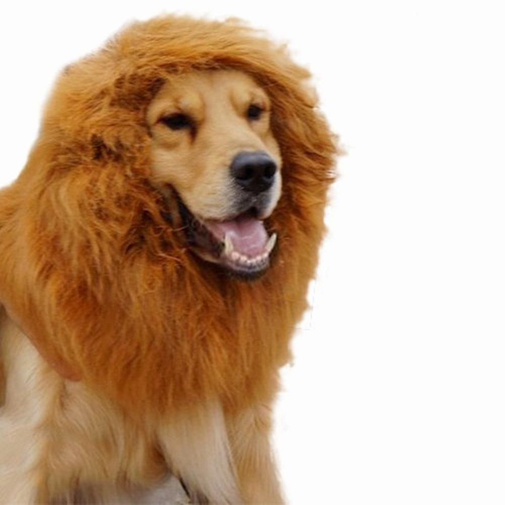Ricisung Pet Costume Lion Mane Perruque pour chien chat Halloween Dress Up avec oreilles Walter S. Première de poule