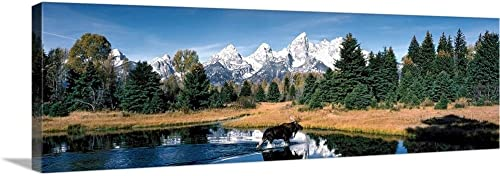 Moose Beaver Pond Grand Teton National Park WY Canvas Wall Art Print