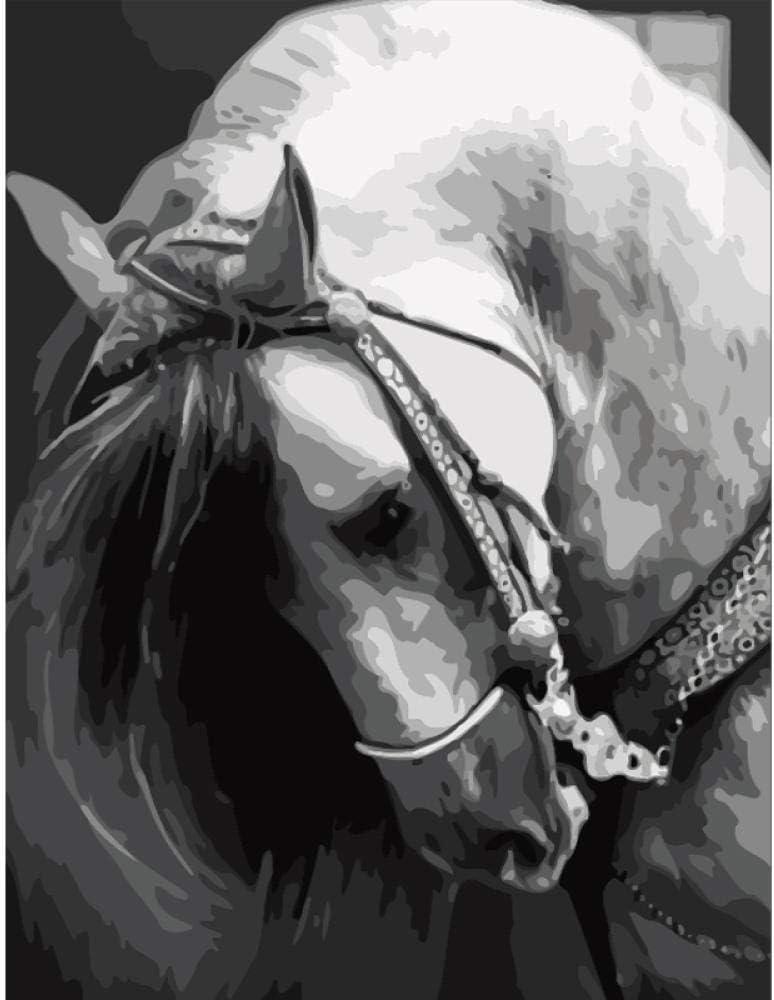 Pintar por Numeros Adultos Niños, DIY Pintura, Cabeza de caballo - Con Marco de Madera - 40x50cm