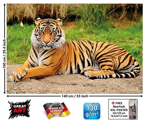 GREAT ART Wall Decoration Tiger Photo Wallpaper – Majestic Tiger Mural Wild Animal Poster Fierce Cat Decor Jungle Hunter 55 Inch x 39.4 Inch