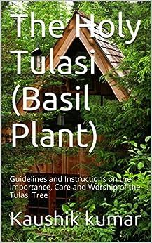 basil plant care instructions