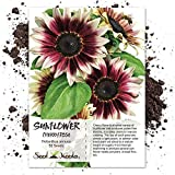buy Seed Needs, Cherry Rose Sunflower (Helianthus annuus) 50 Seeds now, new 2019-2018 bestseller, review and Photo, best price $5.85