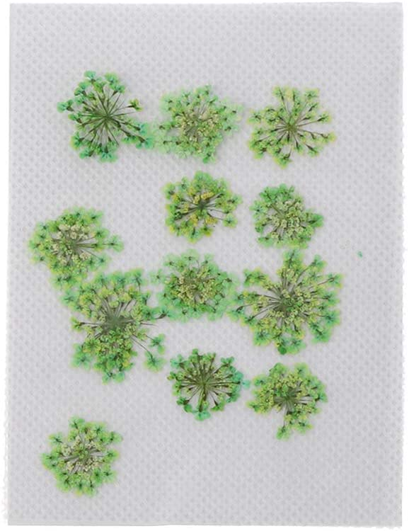 EAPTS 12Pcs Real Pressed Flowers Lace Dried Flowers for Resin Jewelry Making