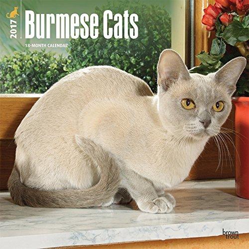 Burmese Cats 2017 Wall Calendar