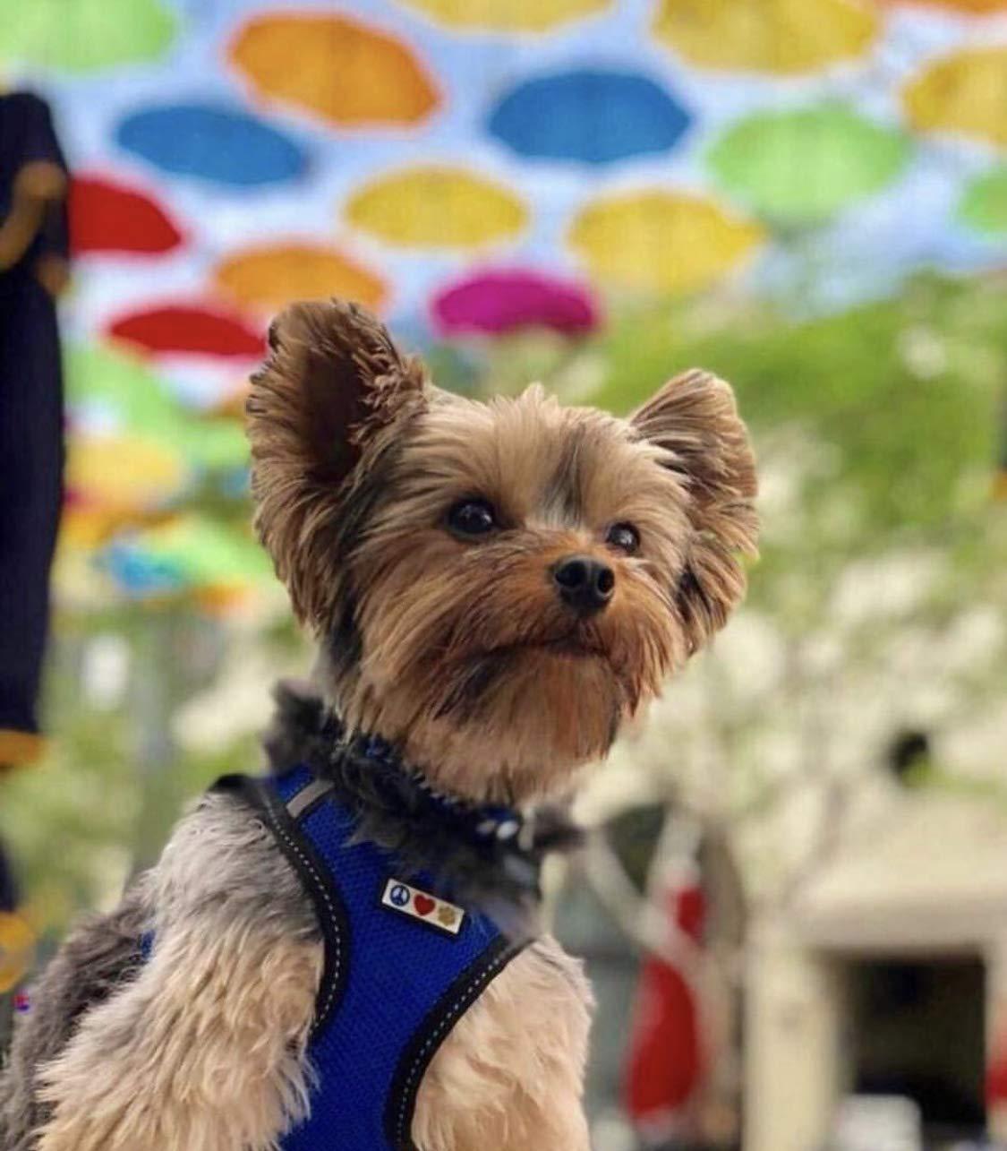 Chaleco Acolchado para Mayor Comodidad dise/ño Resistente Ajustable y Transpirable Mediano Rojo Pawtitas Arnes de Tela Antitirones Perro y Cachorros