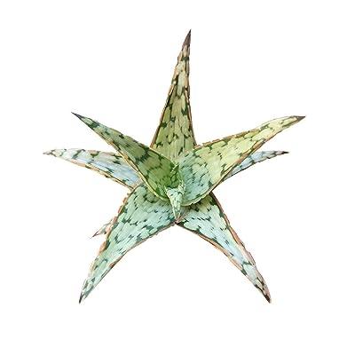 "Aloe Pink Blush Silver Red Edges Green Dots (2"" + Clay Pot) : Garden & Outdoor"