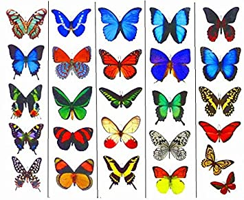 ac7e63469 Amazon.com: Temporary Butterfly Tattoos (Free Shipping) - 5 Sheets ...