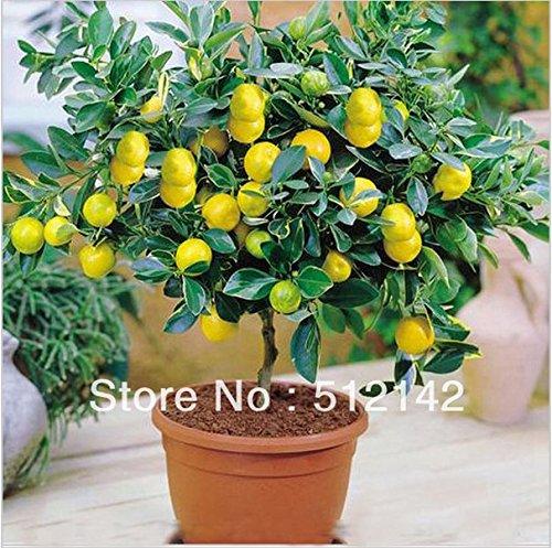 chokdee shop Fresh Flowers & Indoor Plants - Best Reviews Tips
