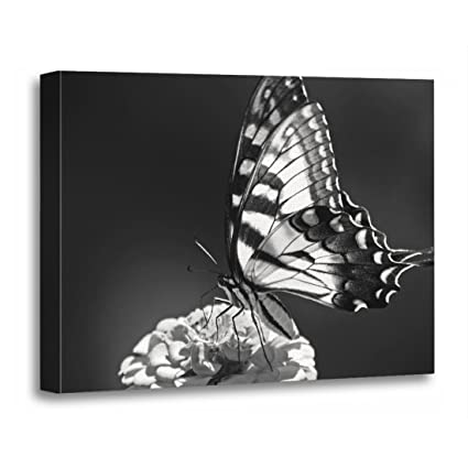 119594a3b Amazon.com: TORASS Canvas Wall Art Print Butterflies Black and White  Monarch Nature Flowers Insects Artwork for Home Decor 12