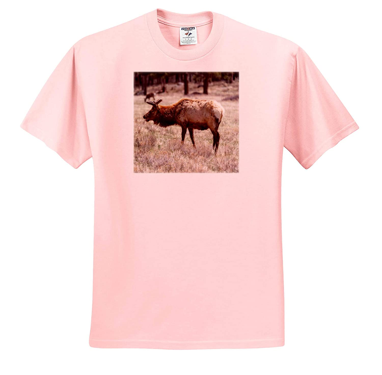 T-Shirts 3dRose Mike Swindle Photography Elk Standing Wildlife