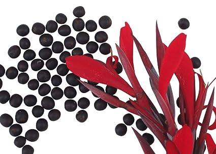 Canna indica Indisches Blumenohr 10 Samen rot