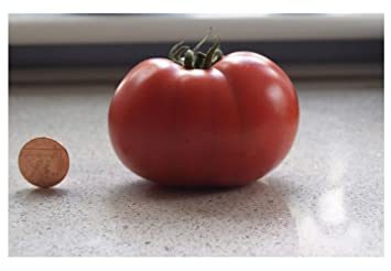 Premier Seeds Direct Tomato Sugar Plum F1 includes 40 Seeds