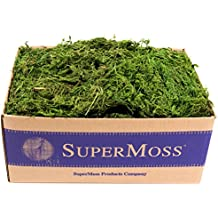 SuperMoss (25325) Forest Moss Preserved, Fresh Green, 3lbs