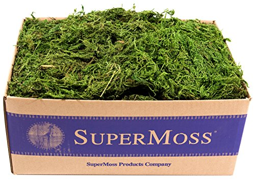 SuperMoss (25325) Forest Moss Preserved, Fresh Green, 3lbs (Sphagnum Basket Moss)