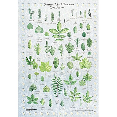 - Leaf Identification Chart