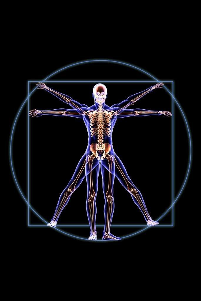 Vitruvian Man Skeleton Anatomy X Ray Photo Photograph Cool Wall Decor Art Print Poster 24x36