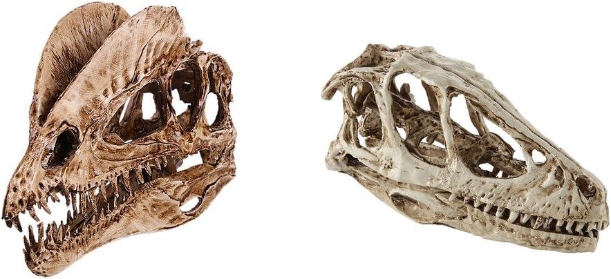 2 Pedazos Calvera de Dinosaurio Modelo de Cabeza de Resina F/ósil Ense/ñanza R/éplica Regalo para Ni/ños